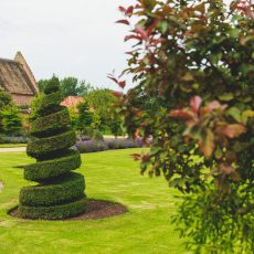 topiary garden at hales hall great barn wedding venue Norwich norfolk