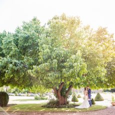 Kathy Ashdown photography bride and groom under mulberry tree on lawn of hales hall wedding venue
